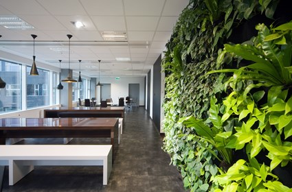 Green House: office dining area with green wall